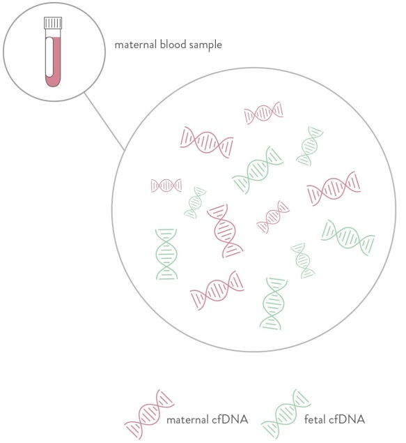 Maternal blood sample and microscopic view of DNA