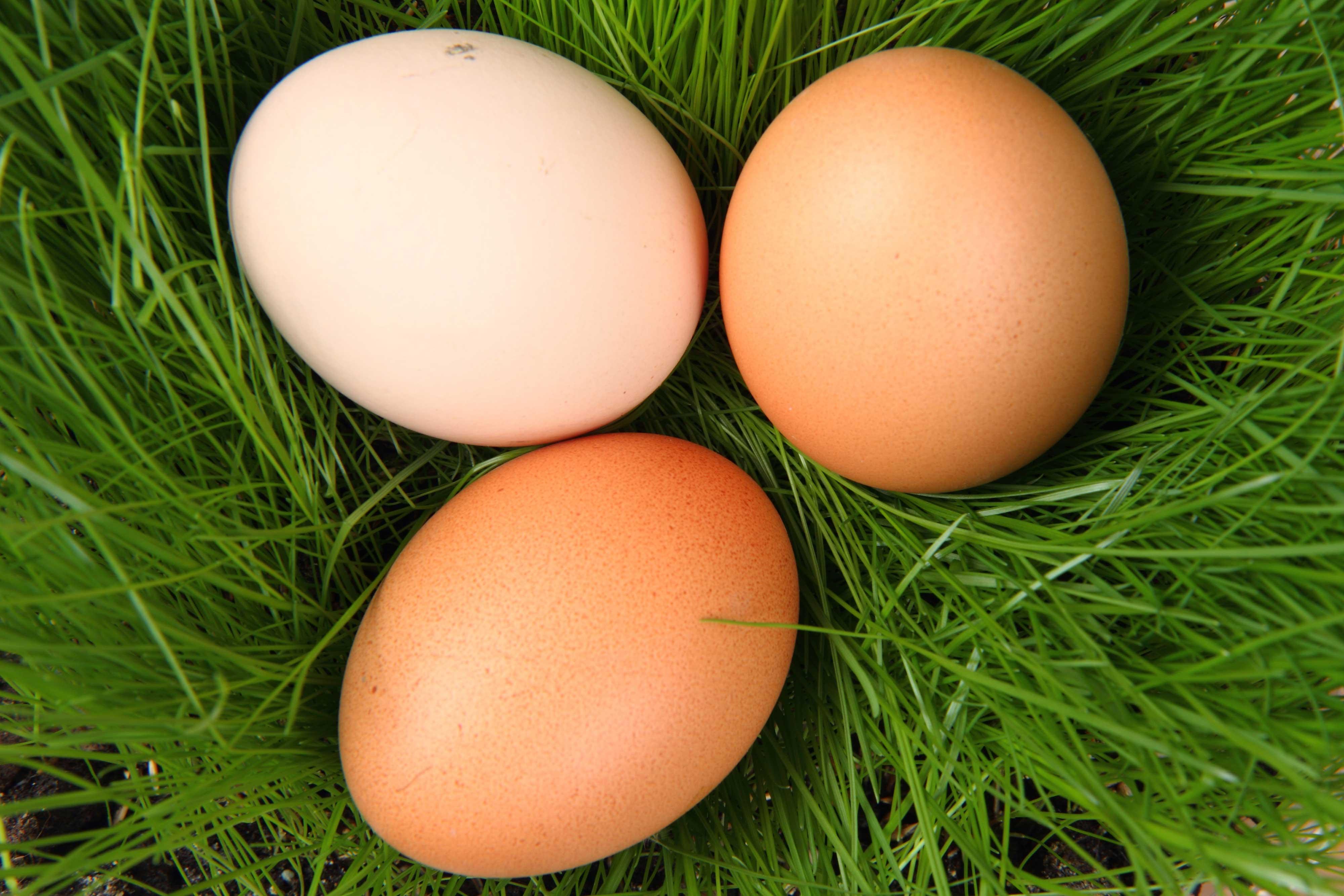various egg colours symbolising female egg cells