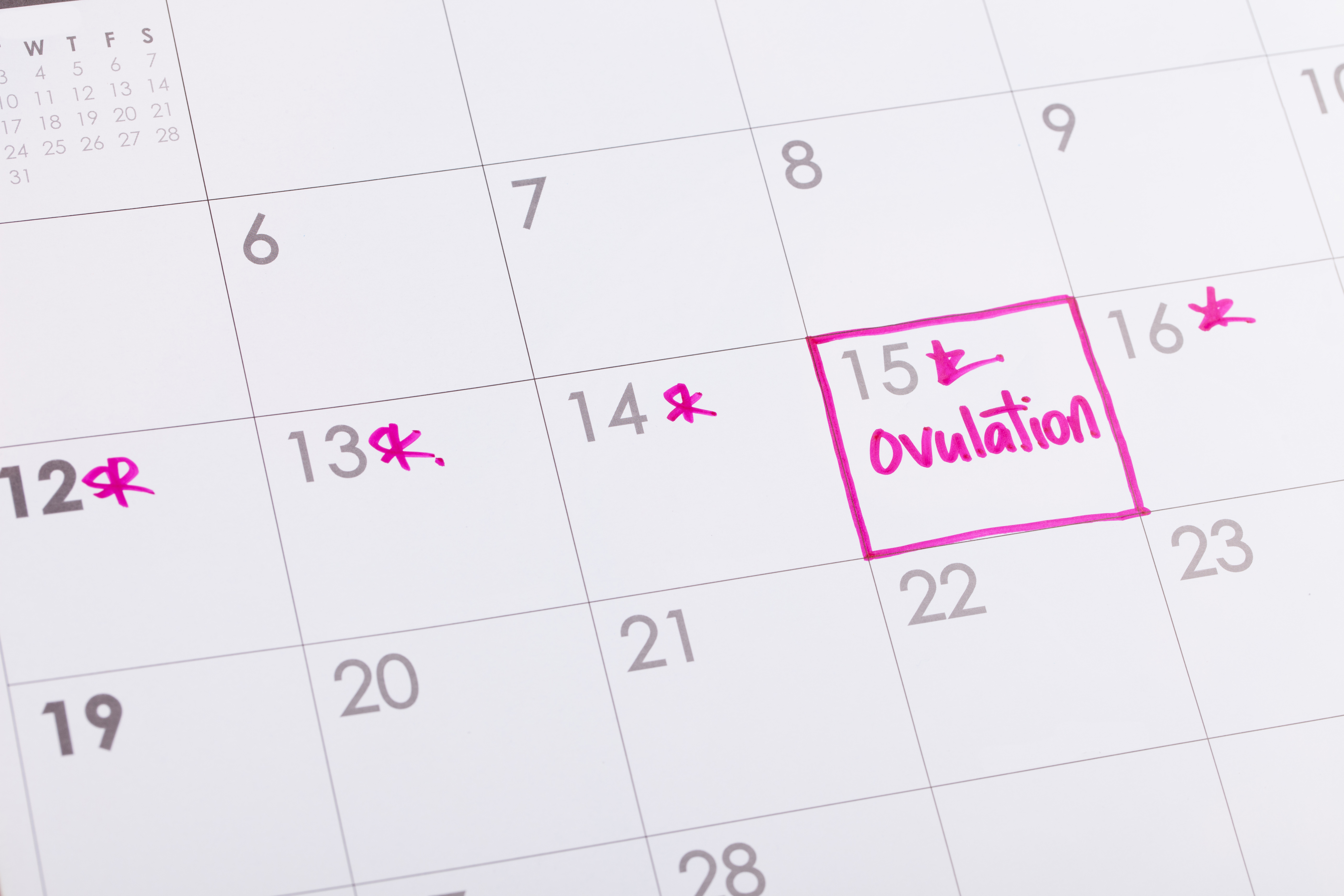ovulation cycle tracking